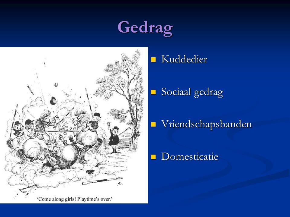 Gedrag Kuddedier Sociaal gedrag Vriendschapsbanden Domesticatie