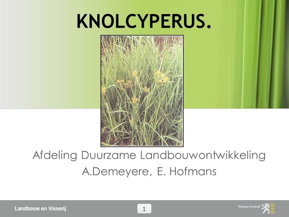 Landbouw en Visserij 1 KNOLCYPERUS. Afdeling Duurzame Landbouwontwikkeling A.Demeyere, E. Hofmans