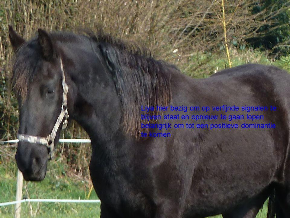 Harmonie  Zie hier het paard in rust maar wel energiek en alert.