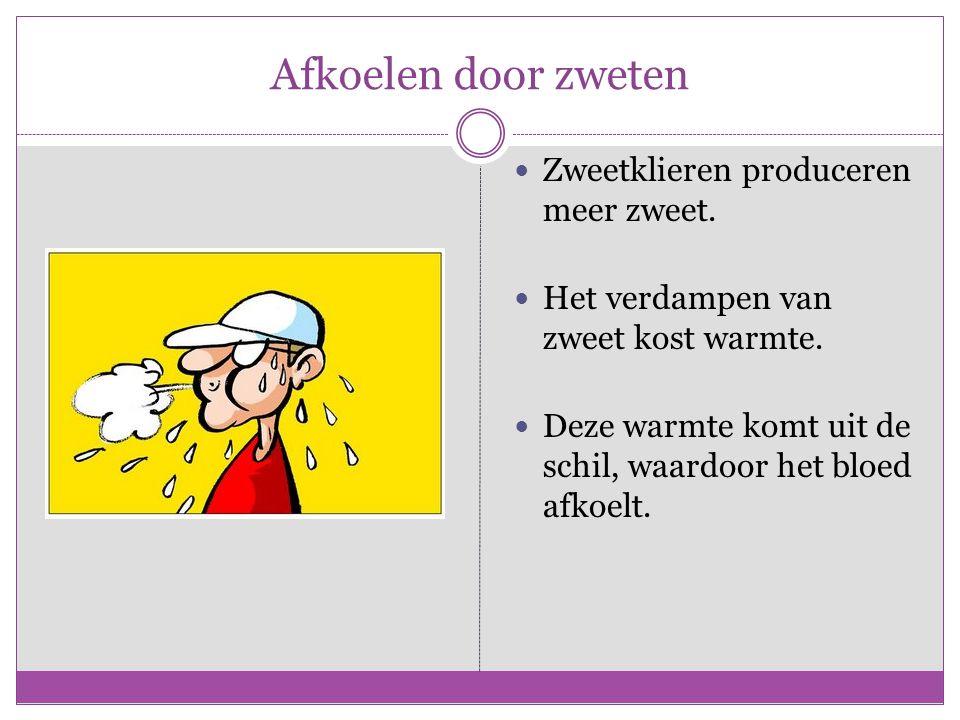 Afkoelen door zweten Zweetklieren produceren meer zweet. Het verdampen van zweet kost warmte. Deze warmte komt uit de schil, waardoor het bloed afkoel