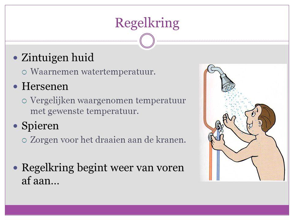 Regelkring Zintuigen huid  Waarnemen watertemperatuur. Hersenen  Vergelijken waargenomen temperatuur met gewenste temperatuur. Spieren  Zorgen voor