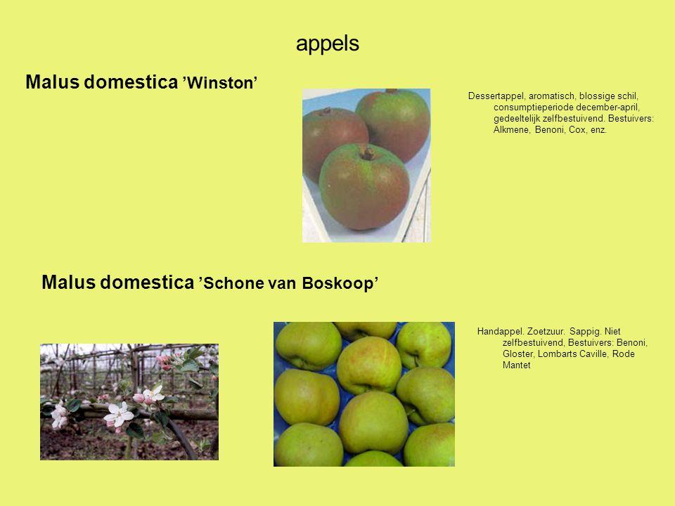 appels Dessertappel, aromatisch, blossige schil, consumptieperiode december-april, gedeeltelijk zelfbestuivend. Bestuivers: Alkmene, Benoni, Cox, enz.