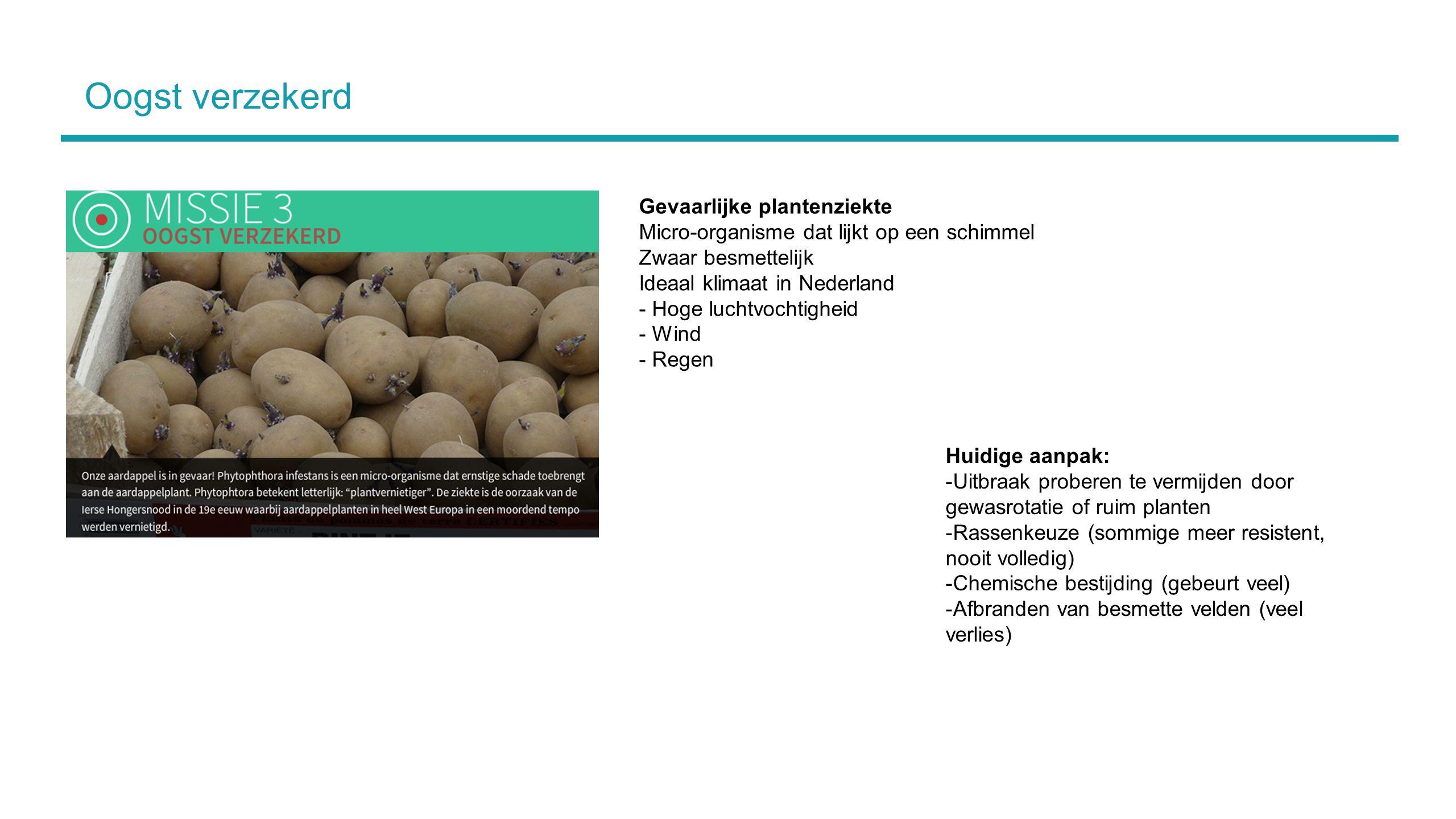 Oogst verzekerd Huidige aanpak: -Uitbraak proberen te vermijden door gewasrotatie of ruim planten -Rassenkeuze (sommige meer resistent, nooit volledig) -Chemische bestijding (gebeurt veel) -Afbranden van besmette velden (veel verlies) Gevaarlijke plantenziekte Micro-organisme dat lijkt op een schimmel Zwaar besmettelijk Ideaal klimaat in Nederland - Hoge luchtvochtigheid - Wind - Regen