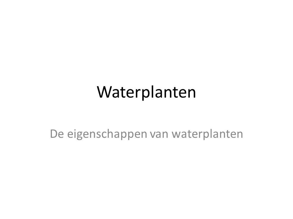 Waterplanten De eigenschappen van waterplanten