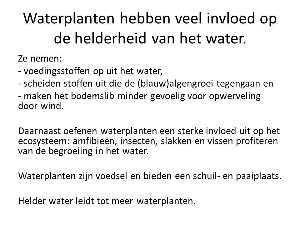 Waterplanten hebben veel invloed op de helderheid van het water. Ze nemen: - voedingsstoffen op uit het water, - scheiden stoffen uit die de (blauw)al