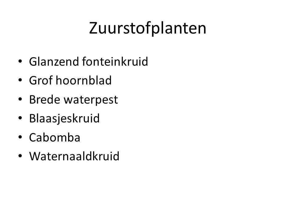 Zuurstofplanten Glanzend fonteinkruid Grof hoornblad Brede waterpest Blaasjeskruid Cabomba Waternaaldkruid