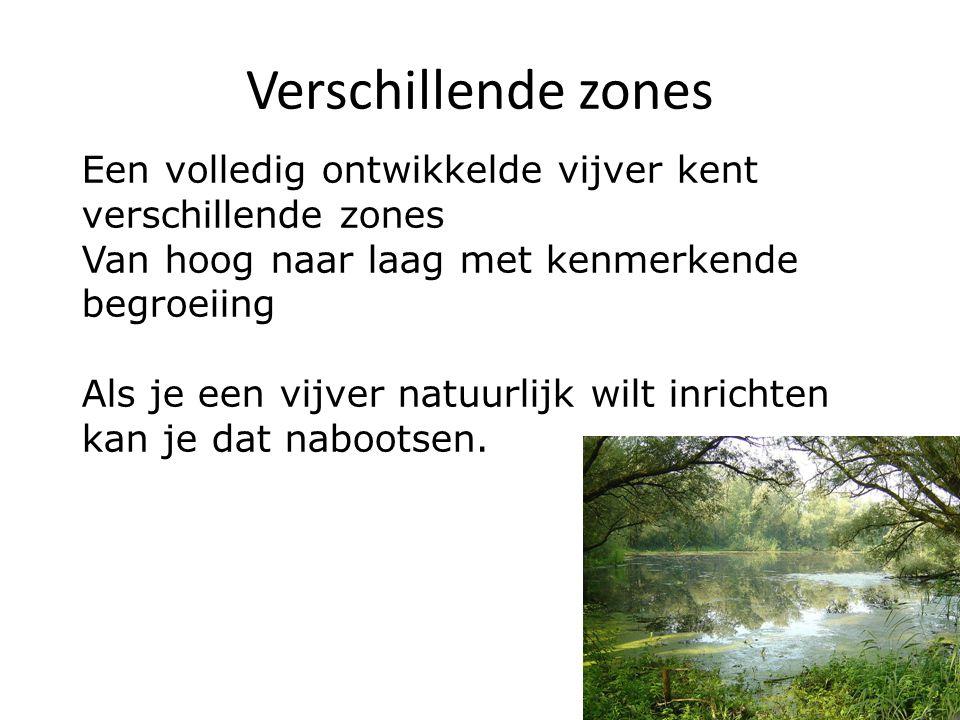 Verschillende zones Een volledig ontwikkelde vijver kent verschillende zones Van hoog naar laag met kenmerkende begroeiing Als je een vijver natuurlij