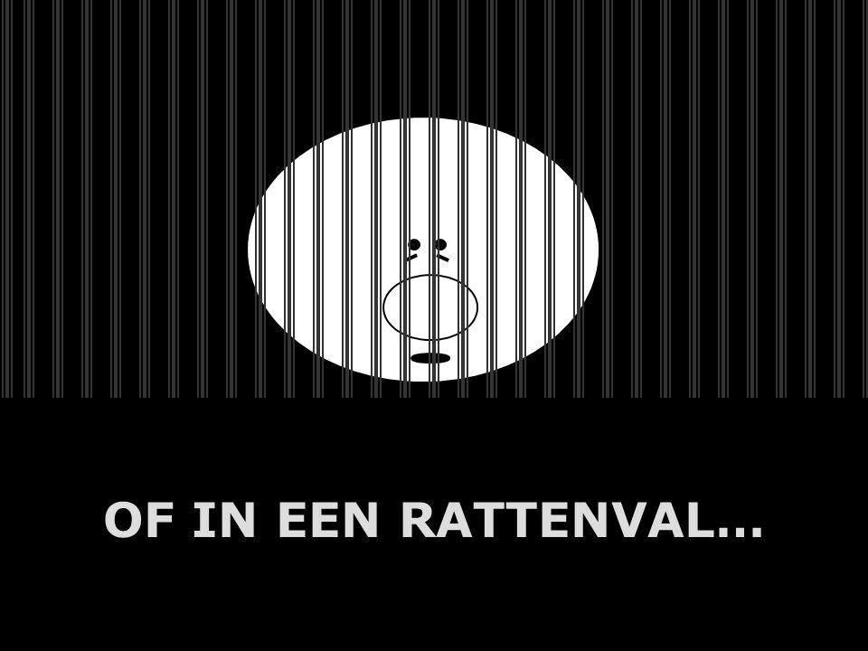 A.U.Saleem OF IN EEN RATTENVAL…