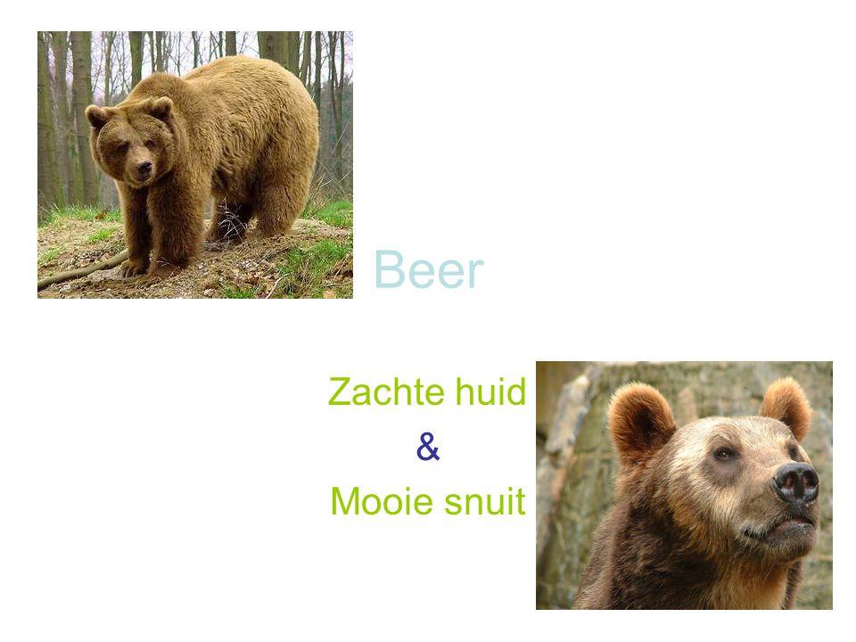 Beer Zachte huid & Mooie snuit