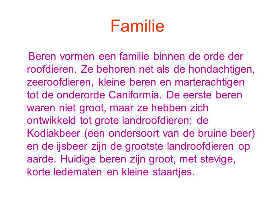 Familie Beren vormen een familie binnen de orde der roofdieren.