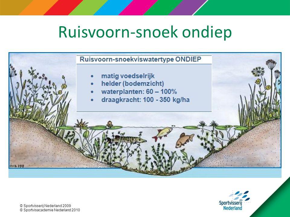 © Sportvisserij Nederland 2009 © Sportvisacademie Nederland 2010 Ruisvoorn-snoek ondiep