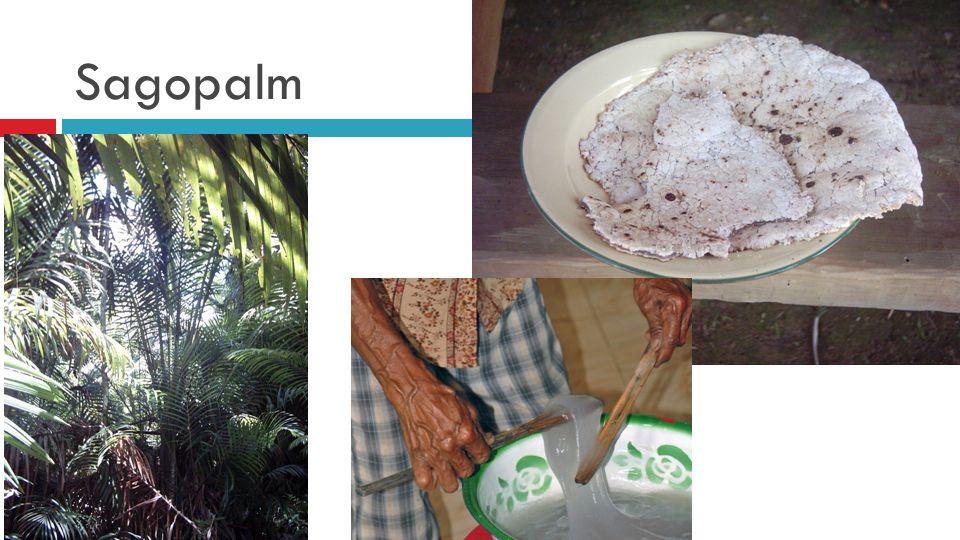 3) Vink aan wat past  At noten en vruchten  At insecten  Was nomade  Gebruikte stenen werktuigen  Gebruikte vet van dieren als huidcrème  Naaide kleding VoedselverzamelaarJager uit laatste ijstijd