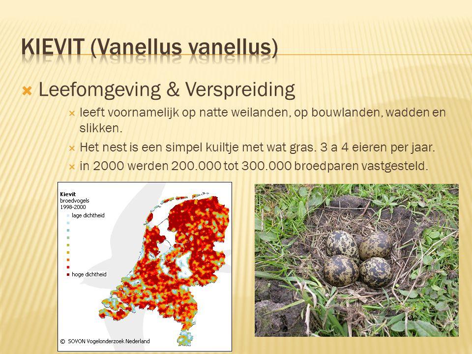  Leefomgeving & Verspreiding  leeft voornamelijk op natte weilanden, op bouwlanden, wadden en slikken.
