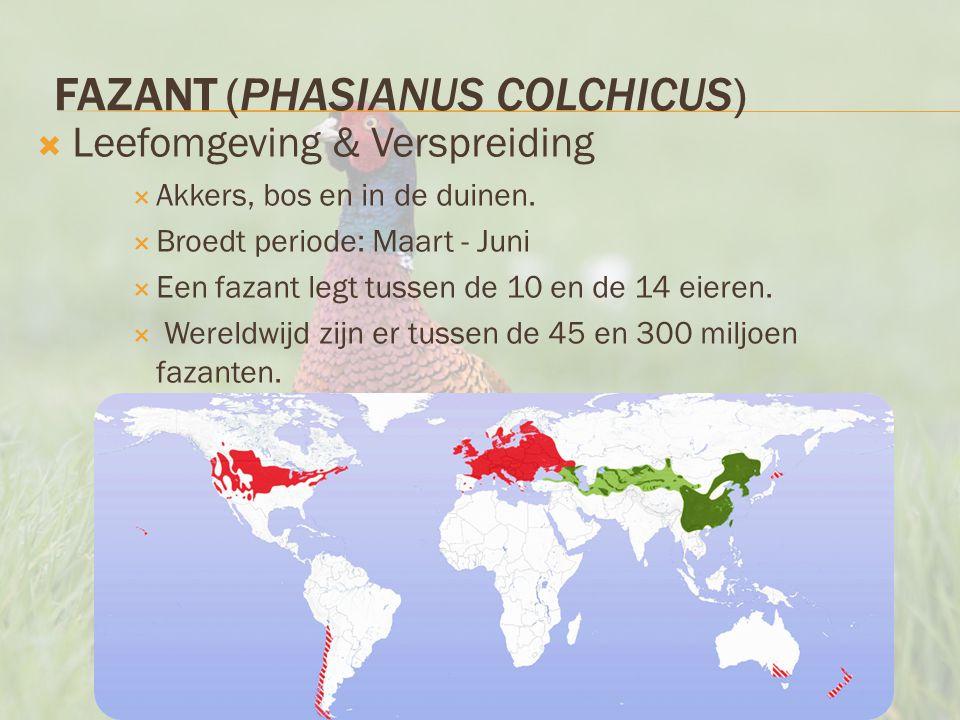 FAZANT (PHASIANUS COLCHICUS)  Leefomgeving & Verspreiding  Akkers, bos en in de duinen.  Broedt periode: Maart - Juni  Een fazant legt tussen de 1