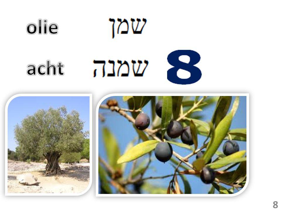 3 Toen zeide hij: Ga heen, vraag buitenshuis vaten van al uw buren, ledige vaten; laat het er niet weinige zijn.