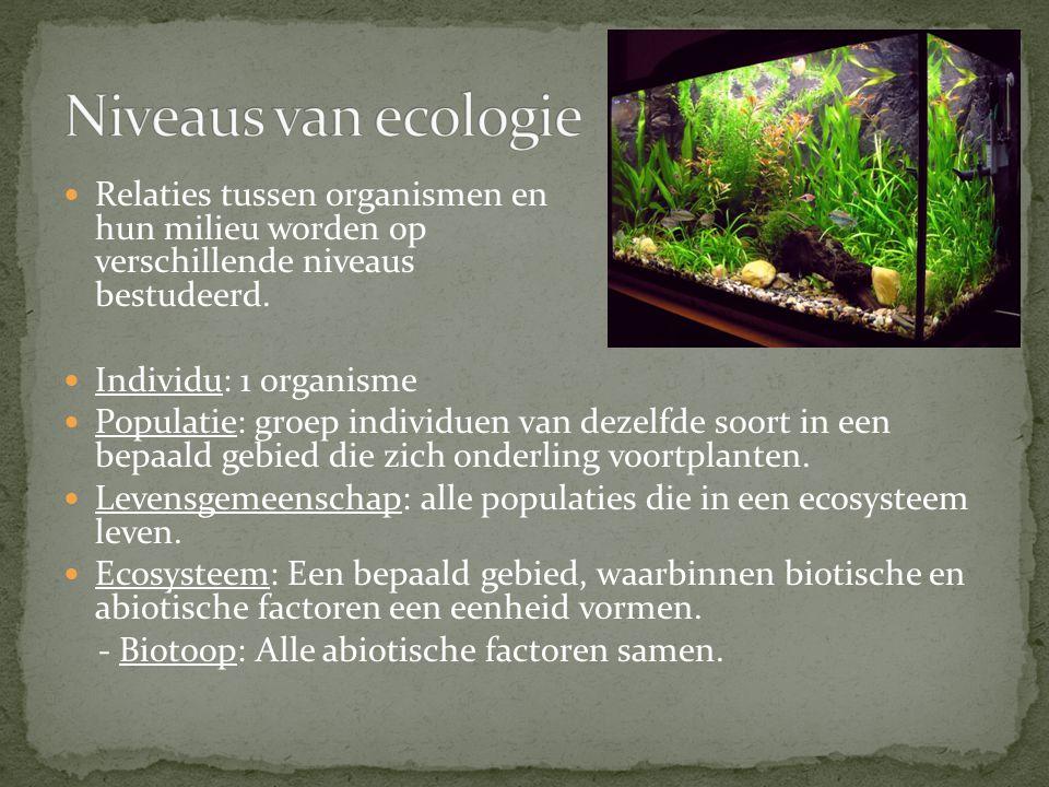 Relaties tussen organismen en hun milieu worden op verschillende niveaus bestudeerd.
