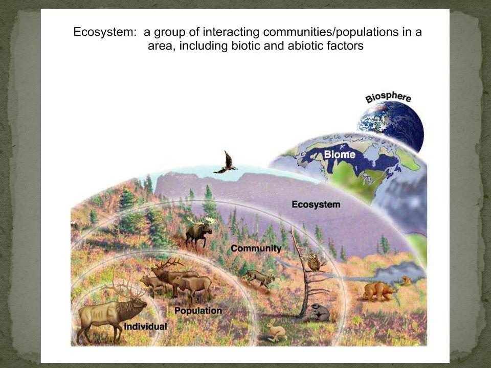 Voedselketen: Een reeks soorten, waarbij elke soort voedselbron is voor de volgende soort.
