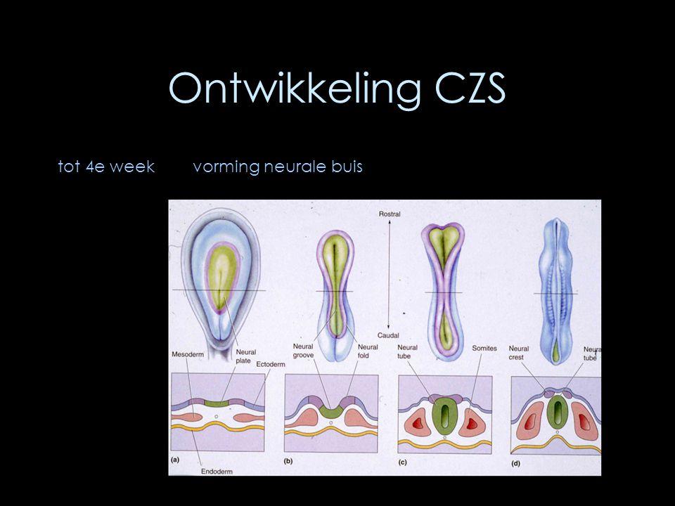Ontwikkeling CZS tot 4e weekvorming neurale buis