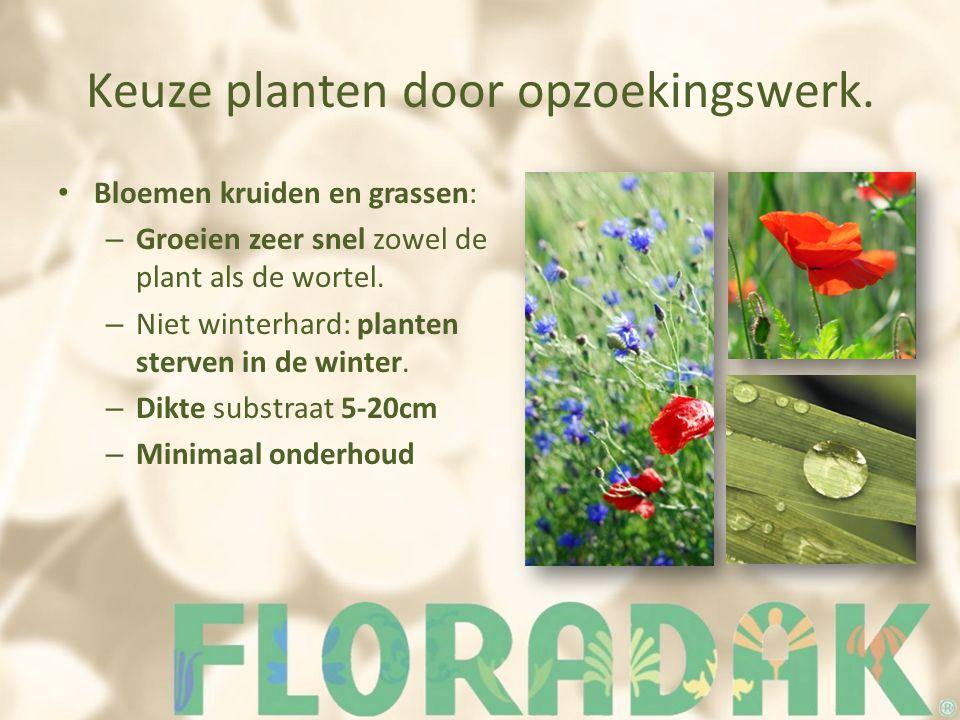Keuze planten door opzoekingswerk. Bloemen kruiden en grassen: – Groeien zeer snel zowel de plant als de wortel. – Niet winterhard: planten sterven in
