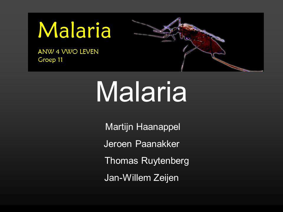 Malaria Martijn Haanappel Jeroen Paanakker Thomas Ruytenberg Jan-Willem Zeijen