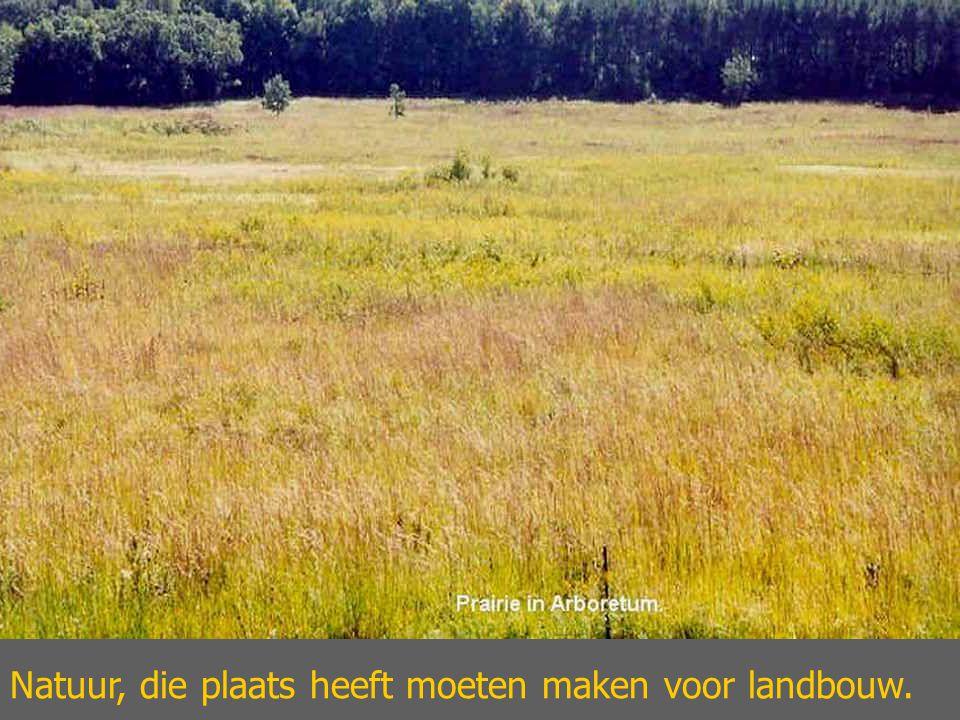 Natuur, die plaats heeft moeten maken voor landbouw.