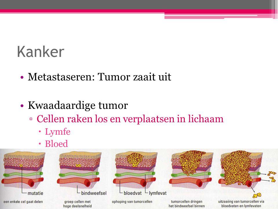 Kanker Metastaseren: Tumor zaait uit Kwaadaardige tumor ▫Cellen raken los en verplaatsen in lichaam  Lymfe  Bloed