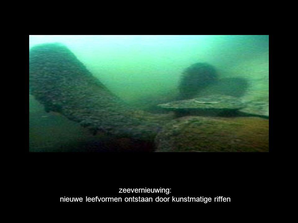 zeevernieuwing: nieuwe leefvormen ontstaan door kunstmatige riffen