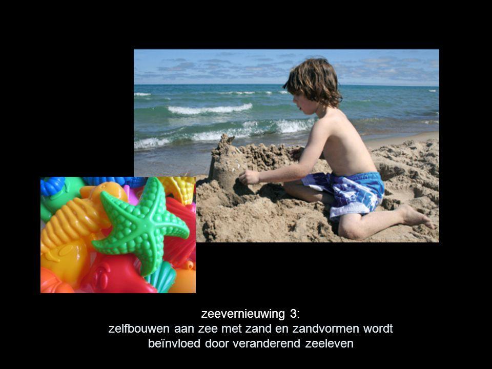 zeevernieuwing 3: zelfbouwen aan zee met zand en zandvormen wordt beïnvloed door veranderend zeeleven