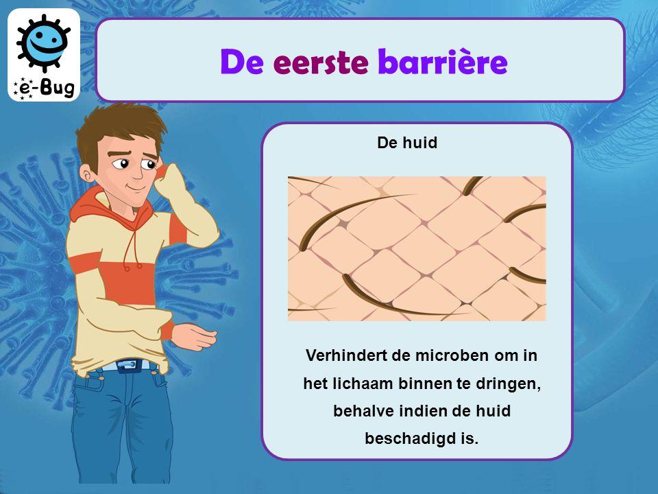 De huid Verhindert de microben om in het lichaam binnen te dringen, behalve indien de huid beschadigd is.