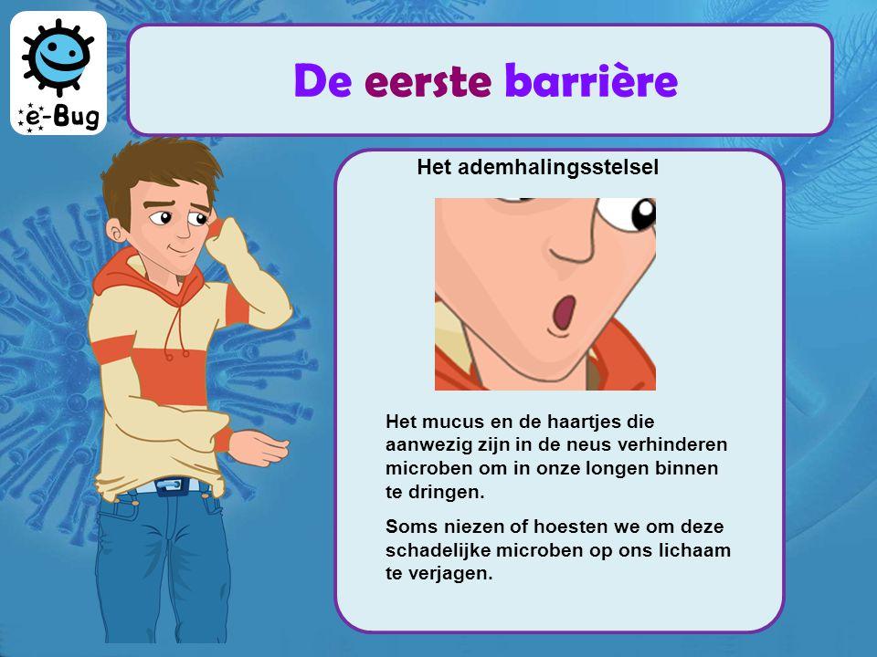 Het ademhalingsstelsel Het mucus en de haartjes die aanwezig zijn in de neus verhinderen microben om in onze longen binnen te dringen. Soms niezen of
