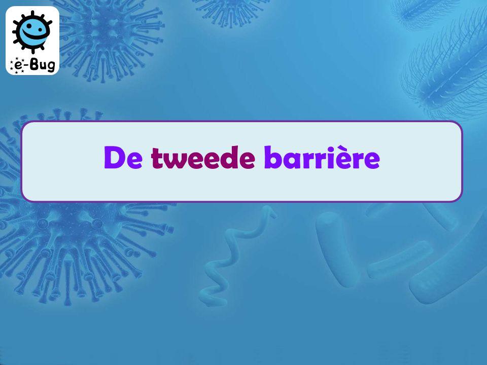 De tweede barrière De niet-specifieke witte bloedlichaampjes Rode bloedlichaampjes: ze transporteren ijzer en zuurstof doorheen het lichaam Witte bloedlichaampjes:ze helpen de infectie te bestrijden Plasma : een vloeistof die de bloedcellen transporteert Het bloed bevat: