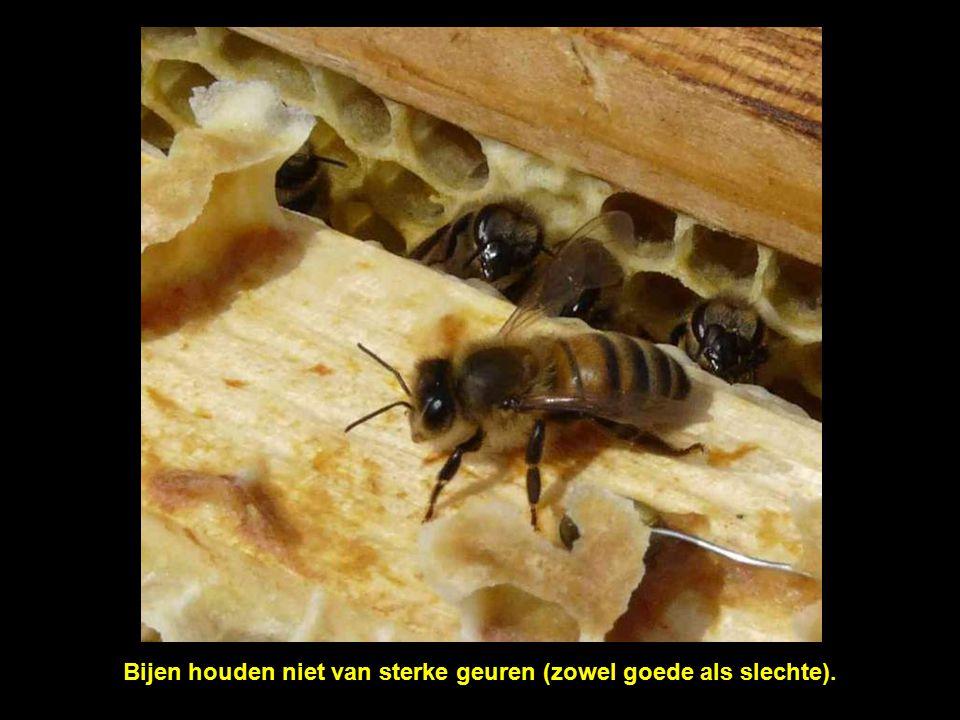 Bijen zijn uitzonderlijke schepsels. Ze zijn zeer sociaal.