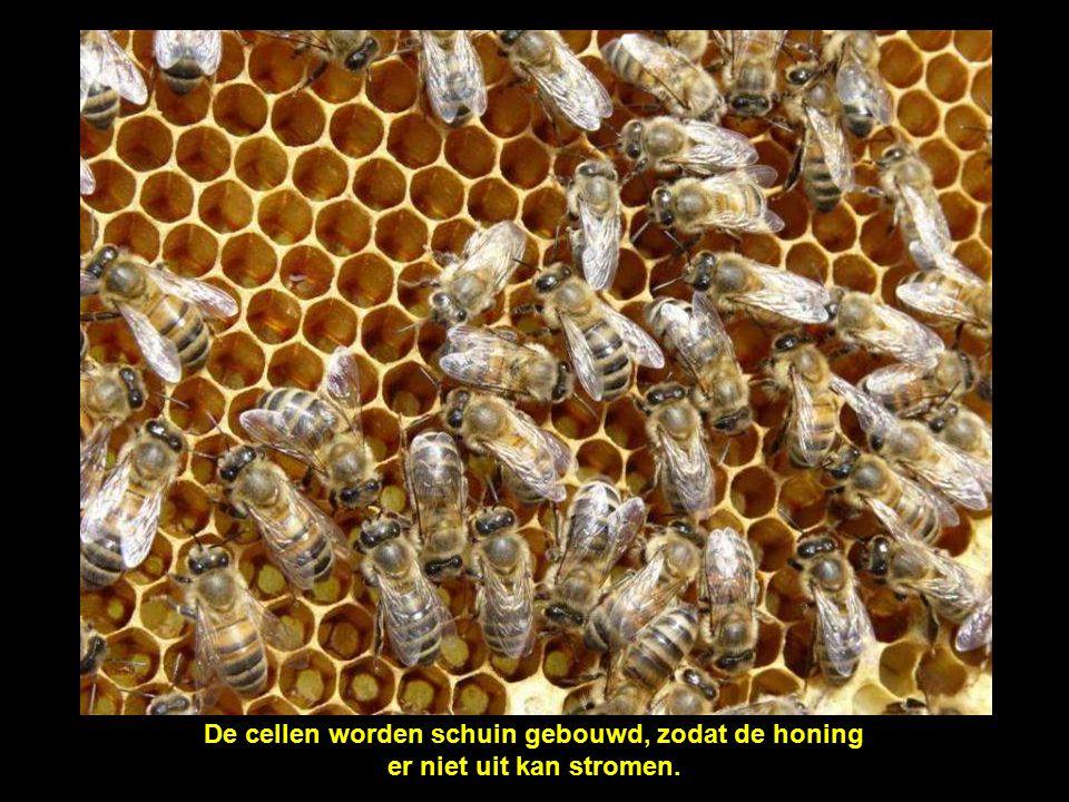 Met honing gevulde cellen, kijk naar de kleine 'poeltjes', dit is honing in de maak waar het water nog moet uit verdampt worden.