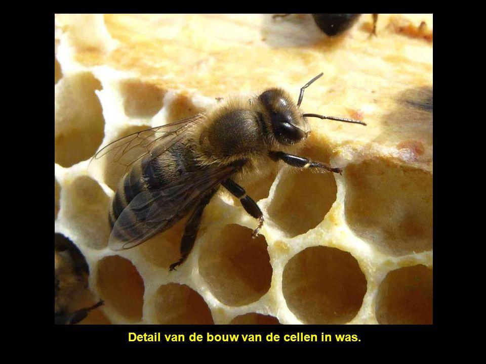 De activiteit in de bijenkorf neemt nooit af