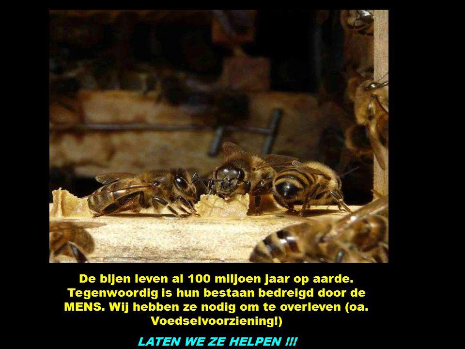 Bijen steken enkel als ze zich erg bedreigd voelen, soms mensen die wild gebaren of praten.