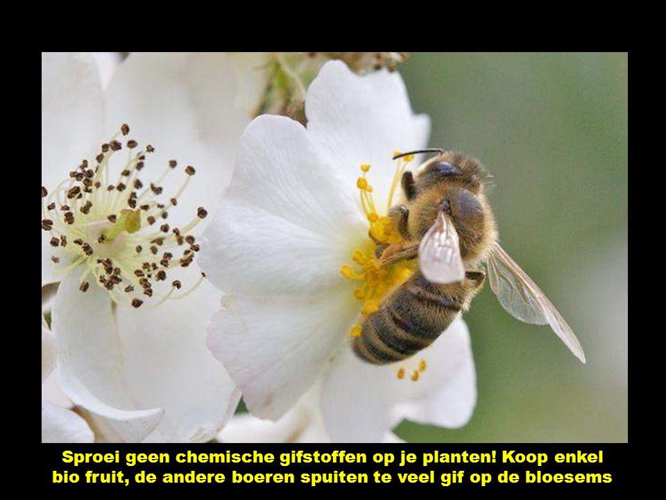 De bijen leven al 100 miljoen jaar op aarde. Tegenwoordig is hun bestaan bedreigd door de MENS.