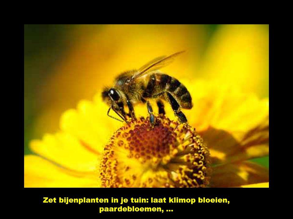 Sproei geen chemische gifstoffen op je planten! Koop enkel bio fruit, de andere boeren spuiten te veel gif op de bloesems