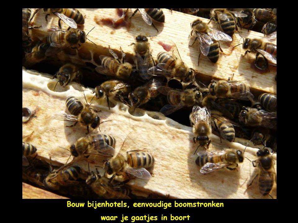 Zet bijenplanten in je tuin: laat klimop bloeien, paardebloemen, …