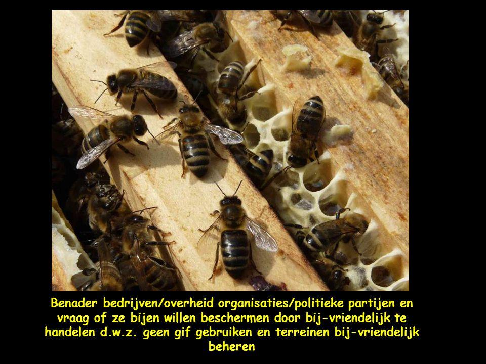 Bouw bijenhotels, eenvoudige boomstronken waar je gaatjes in boort