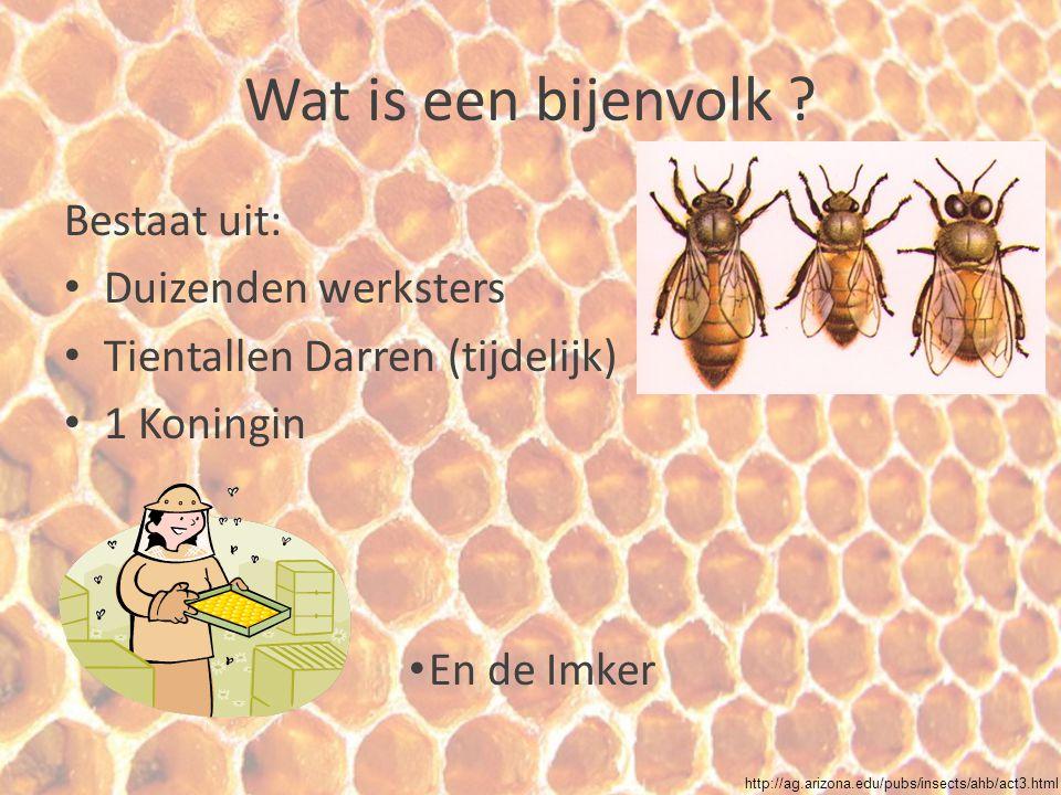 Wat is een bijenvolk ? Bestaat uit: Duizenden werksters Tientallen Darren (tijdelijk) 1 Koningin En de Imker http://ag.arizona.edu/pubs/insects/ahb/ac