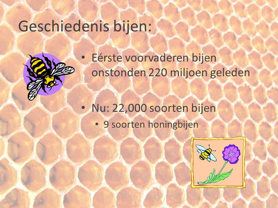 Geschiedenis bijenhouden : Honing verzamelen in het wild Pre-historie (rotstekeningen in Spanje) Gebeurt nu nog in Azië en Afrika Prehistorische rotstekening laat verzamelen van honing zien.