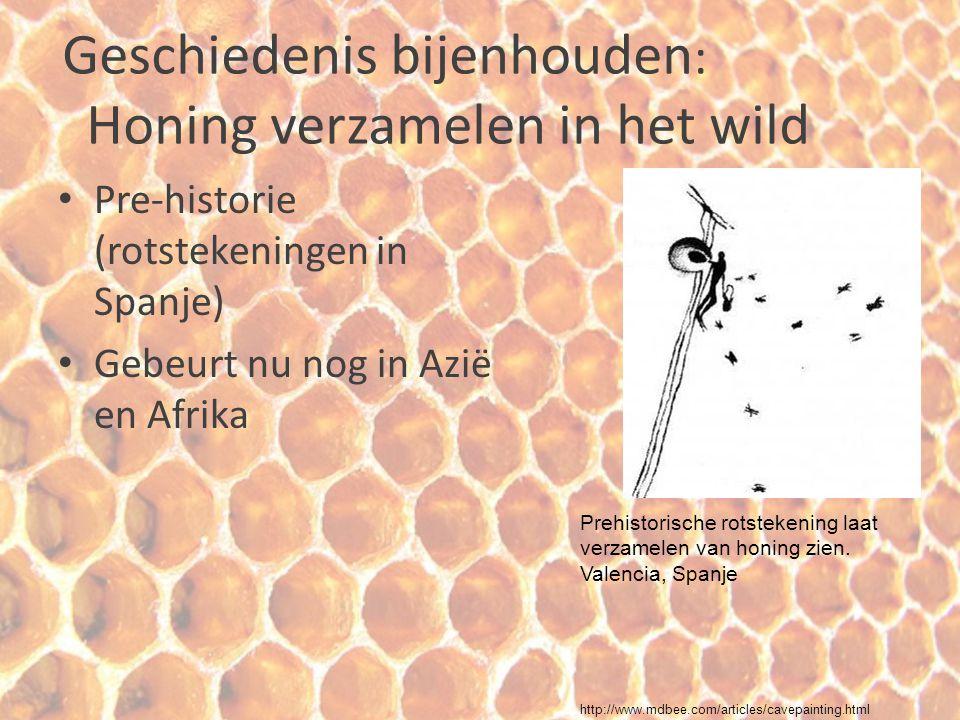 Geschiedenis bijenhouden : Honing verzamelen in het wild Pre-historie (rotstekeningen in Spanje) Gebeurt nu nog in Azië en Afrika Prehistorische rotst