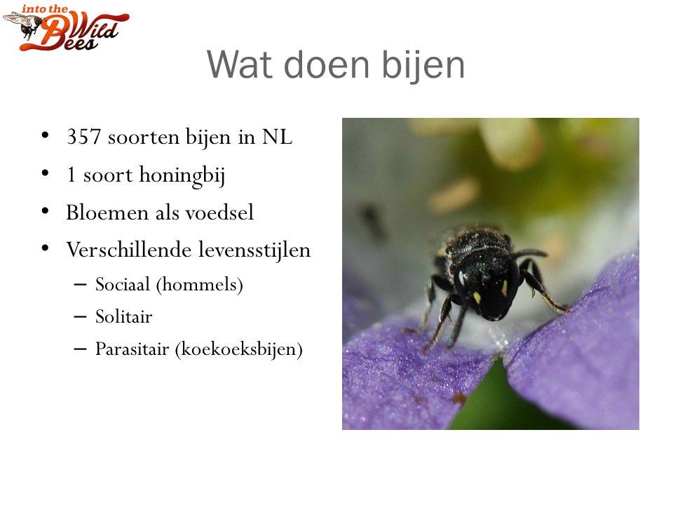 Wat doen bijen 357 soorten bijen in NL 1 soort honingbij Bloemen als voedsel Verschillende levensstijlen – Sociaal (hommels) – Solitair – Parasitair (koekoeksbijen)