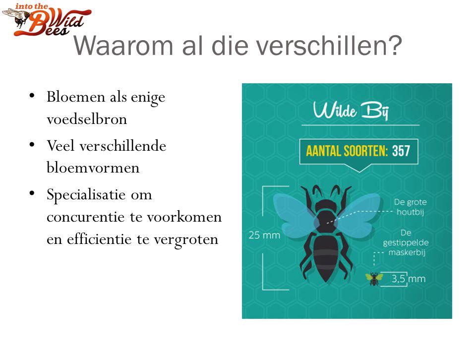 De Opdracht Werk samen Noteer een reden voor het ontstaan van verschillende vormen/kleuren/levensstij len van bijen Leg goed uit waarom Drie teams gaan hun idee voordragen