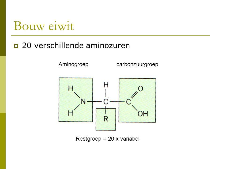 Bouw eiwit  20 verschillende aminozuren Aminogroepcarbonzuurgroep Restgroep = 20 x variabel