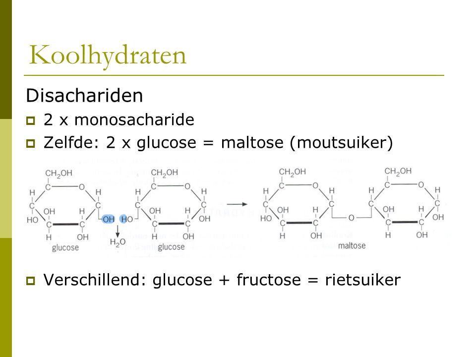 Disachariden  2 x monosacharide  Zelfde: 2 x glucose = maltose (moutsuiker)  Verschillend: glucose + fructose = rietsuiker Koolhydraten