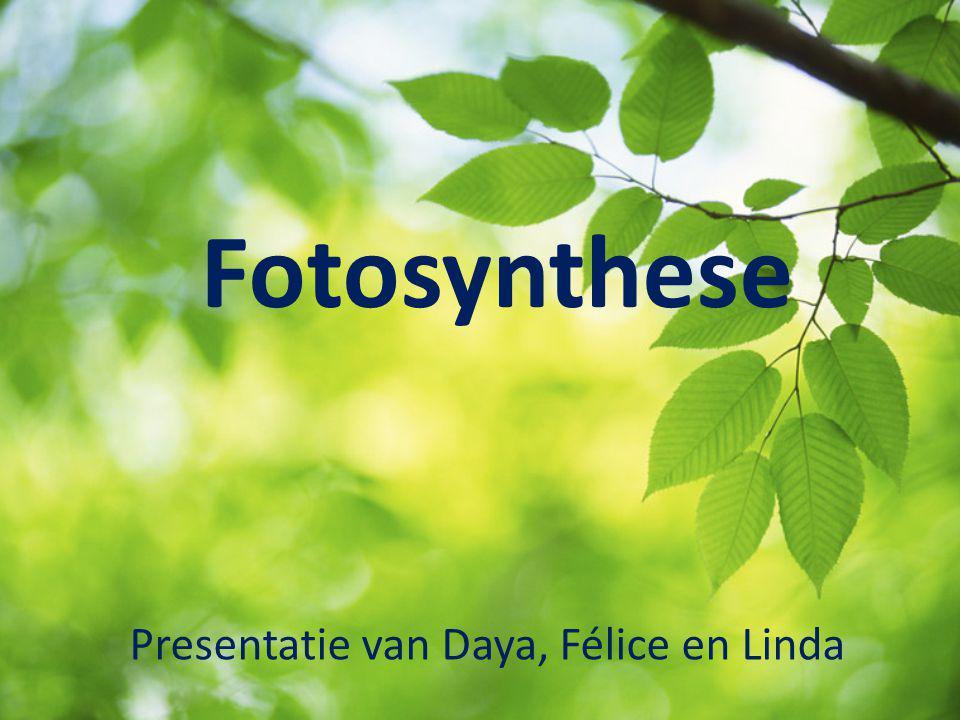 Fotosynthese Presentatie van Daya, Félice en Linda