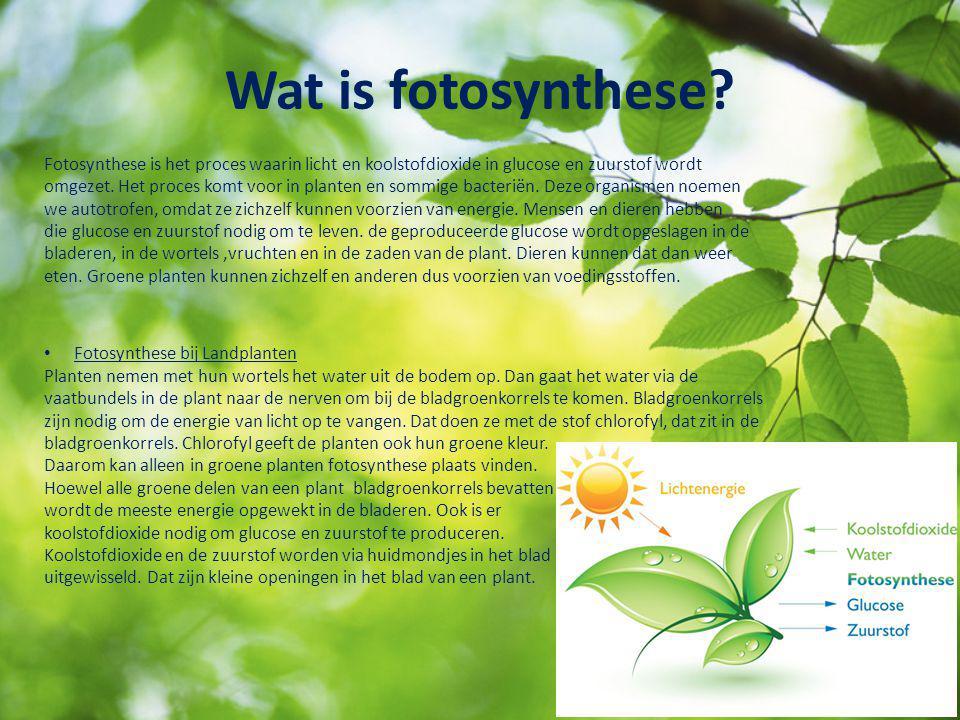 Wat is fotosynthese? Fotosynthese is het proces waarin licht en koolstofdioxide in glucose en zuurstof wordt omgezet. Het proces komt voor in planten