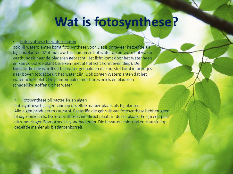 Wat is fotosynthese? Fotosynthese bij waterplanten ook bij waterplanten komt fotosynthese voor. Dat is ongeveer hetzelfde als bij landplanten. Met hun