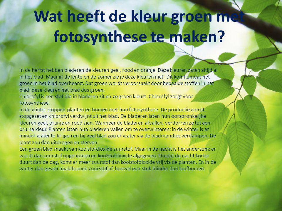 Wat heeft de kleur groen met fotosynthese te maken? In de herfst hebben bladeren de kleuren geel, rood en oranje. Deze kleuren zaten altijd al in het